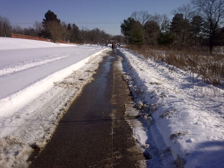 The Laurel Trail after I cleared it